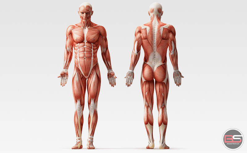MUSCLE: Introduction & Overview